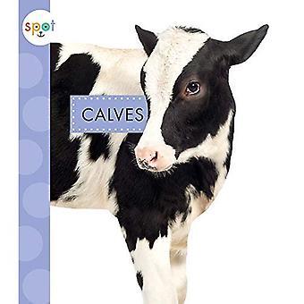 Calves (Spot Baby Farm Animals)
