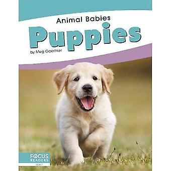 Animal Babies: Puppies