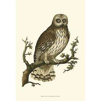 Nozeman Owls II Poster Print (13 x 19)