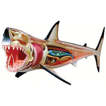 4D Vision grote witte haai anatomie Model