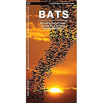 Waterford's Discovery Guide: Bats: A Folding Pocket Guide to the Status of Familiar Species (Waterford's Discovery...