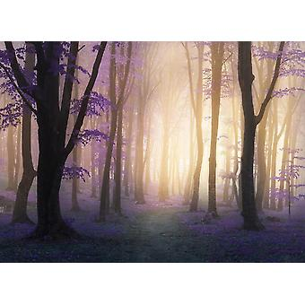 Fondo de pantalla mural Mystic Fogga Bosque