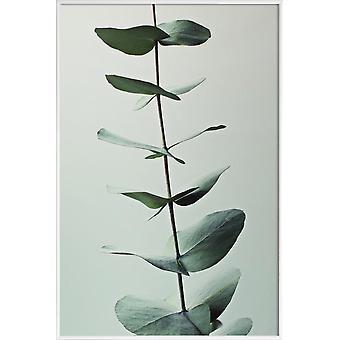 JUNIQE Print - Eucalyptus Groen - Bladeren & Planten Poster in Groen & Wit