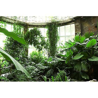 Tapetmaleri tropiske planter i drivhuset