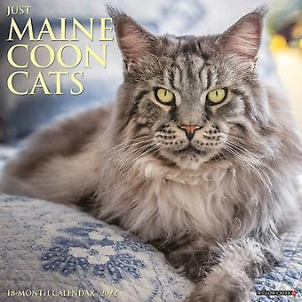 Just Maine Coon Cats 2022 Wall Calendar Cat Breed av Willow Creek Press