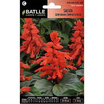 Batlle Half Dwarf Sage Red Fire (Garden , Gardening , Seeds)