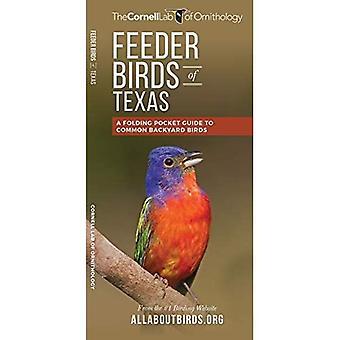 Feeder Birds of Texas: A Folding Pocket Guide to Common Backyard Birds