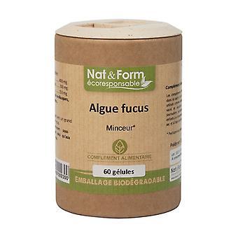 Fucus Algae - Eco Range 60 capsules