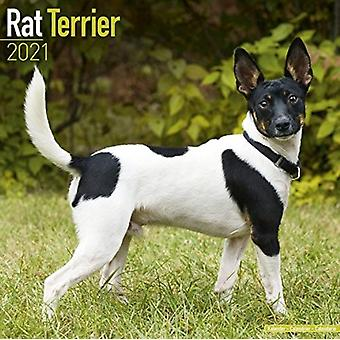 Rat Terrier 2021 Wall Calendar by Created by Avonside Publishing Ltd