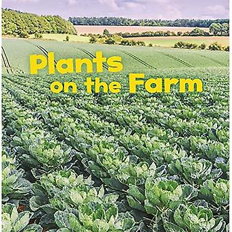 Növények a gazdaságban (mezőgazdasági tények)