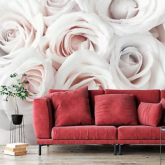 Zelfklevend fotobehang - Satin Rose (Pink)