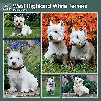 Otter House 2021 Wall Calendar - 365 Days Of West Highland Terriers