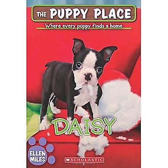 Daisy (la Place du chiot #38)