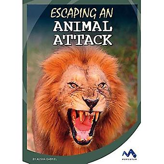 Escaping an Animal Attack (Great Escapes in History)
