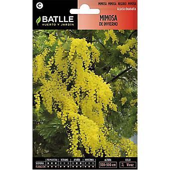 Batlle Mimosa- Acacia Dealbata (Garden , Gardening , Seeds)