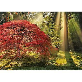 Heye Guiding Light, Magic Forests Palapeli (1000 kappaletta)