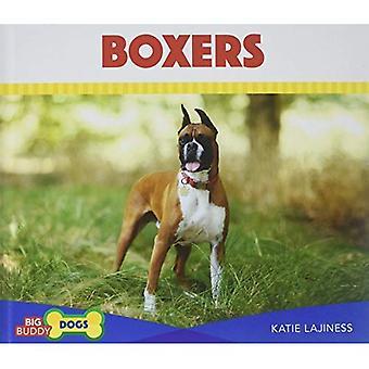 Boksers (grote Buddy honden)