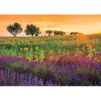 Educa Field Of Sunflowers And Lavender Jigsaw Puzzle (1500 Pieces)