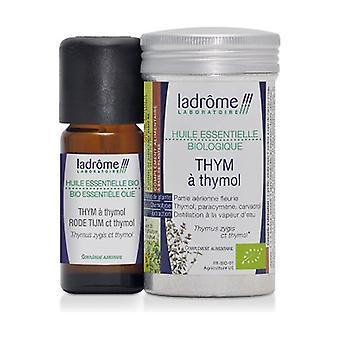Thyme organic Thymol essential oil 10 ml of essential oil
