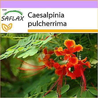 Saflax - 10 siemenet - Meksikon paratiisilintu - Orgueilin de Chine - Orgoglio delle Barbados - Pequeño flamboyan - Pfauenstrauch / Stolz von Barbados