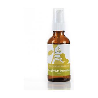 Calophylle vegetable oil 50 ml of oil