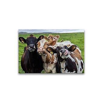 Grappige Koeien die cameraposter -Beeld door Shutterstock bekijken