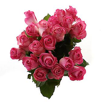 Rose Candy Avalanche Large (20 pcs) - Height 60