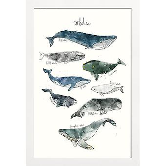JUNIQE Print - Hvaler - Hvalplakat i blå og creme hvid