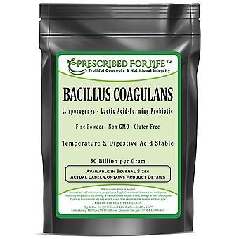Bacillus Coagulans - Temperature & Digestion Stable Probiotic Powder (L. sporogenes - 50 billion/gram)