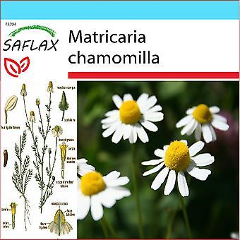 Saflax - Geschenk-Set - 300 Samen - Mayweed - Kamille Sauvage - Camomilla - Manzanilla Común - echten Kamille