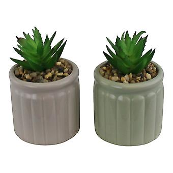 Set Of Two Succulents In Ceramic Pots