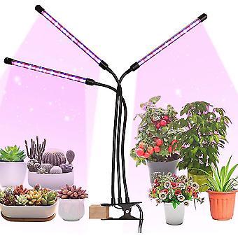 Pflanze wachsen Licht mit Timer