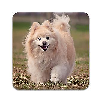 4 ST Dog Pomeranian Coasters