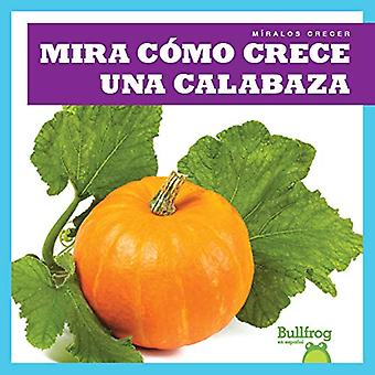 Mira Como Crece Una Calabaza (Watch a Pumpkin Grow) (Miralos Crecer (Watch It Grow))