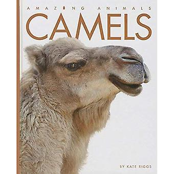 Camels (Amazing Animals (Creative Education Hardcover))