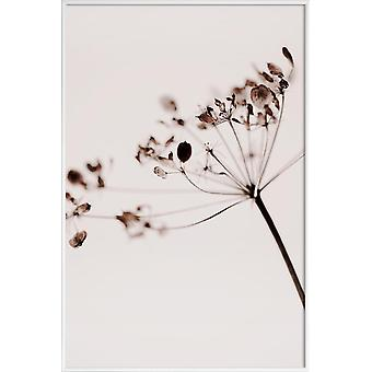 JUNIQE Print - Suszone kwiaty Anetum 1 - Kwiaty Plakat w kolorze brązowym & szarym