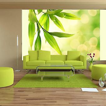Tapete - Grüne Bambusblätter