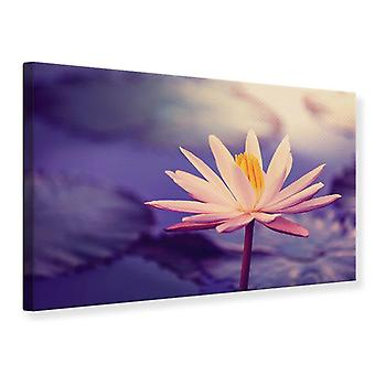 Leinwand drucken Lotus bei Sonnenuntergang