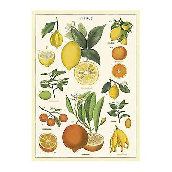 Cavallini Citrus Wrapping Paper / Poster High Quality / Decoupage