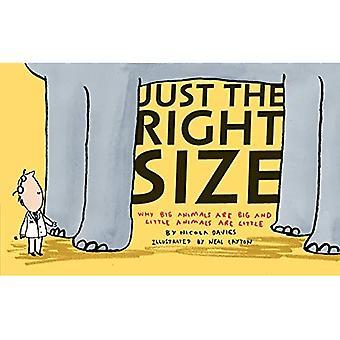 Akkurat den riktige størrelsen: Hvorfor store dyr er store og små dyr er lite