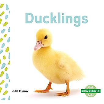Ducklings (Baby Animals)