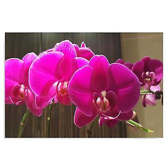 Deco Panel, Orchideen 4