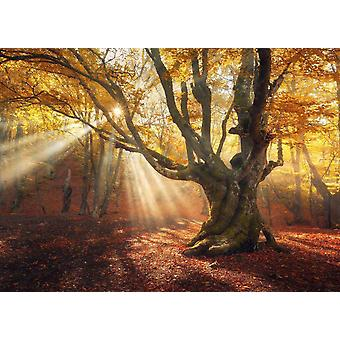 Tapet väggmålning magiska gamla träd skog