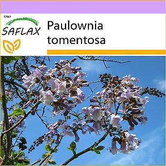 Saflax - 200 Samen - Prinzessin Tree - Arbre Imperial - Albero della Principessa - Paulonia - Blauglockenbaum