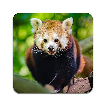 2 ST Red Panda Coasters