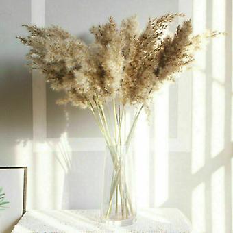 10x Natural Dried Pampas Grass Reed Flower Bunch Bouquet Decor-1