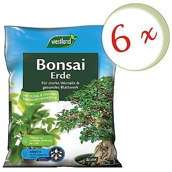 Sparset: 6 x WESTLAND® Bonsai Erde, 4 Liter