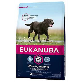 Eukanuba Mature & Senior Lamb and Rice (Dogs , Dog Food , Dry Food)
