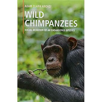 Wilde chimpansees