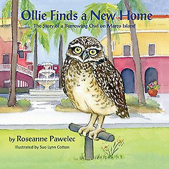Ollie Finds a New Home, the Story of a Burrowing Owl on Marco Island